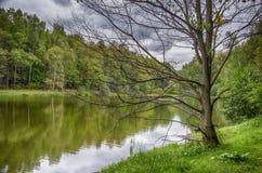 Árbol desnudo por el agua Fotografía de archivo