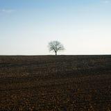 Árbol desnudo solo Imagenes de archivo