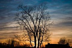 Árbol desnudo y puesta del sol en el fondo, invierno temprano Imágenes de archivo libres de regalías