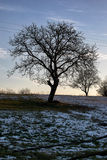 Árbol después de la primera caída de fusión de la nieve Imagenes de archivo
