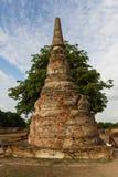 Árbol detrás de la pagoda Imagen de archivo