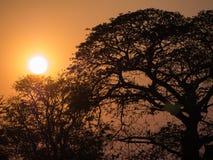 Árbol detrás de The Sun Imagen de archivo