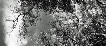 Árbol diseñado Foto de archivo libre de regalías