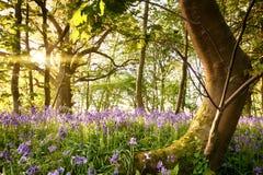 Árbol doblado en bosque de la campanilla Imagen de archivo libre de regalías