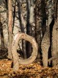 Árbol doblado en el bosque en otoño Foto de archivo libre de regalías