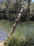 Árbol doblado sobre el río con el oscilación Imagen de archivo