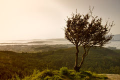Árbol dominante solitario fotografía de archivo