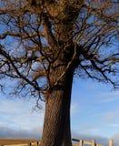 Árbol dramático, en Northumberland, Inglaterra, Reino Unido Imagen de archivo libre de regalías