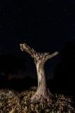 Árbol durante noche Fotos de archivo