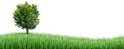 Árbol e hierba Foto de archivo libre de regalías