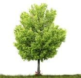 Árbol e hierba Fotografía de archivo