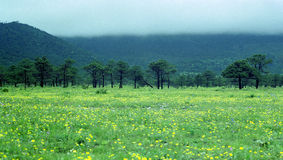 Árbol e hierba de la montaña de la nube Foto de archivo