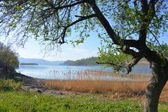 Árbol e hierba en la costa Imagen de archivo libre de regalías