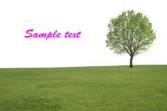 Árbol e hierba solos Imagen de archivo