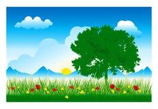 Árbol e hierba (vector) Foto de archivo libre de regalías