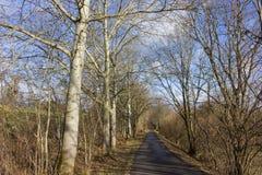 árbol el día soleado del advenimiento del cielo azul en diciembre Imagen de archivo