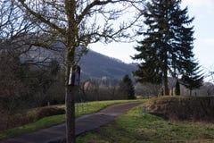 árbol el día soleado del advenimiento del cielo azul en diciembre Foto de archivo
