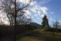 árbol el día soleado del advenimiento del cielo azul en diciembre Fotos de archivo libres de regalías