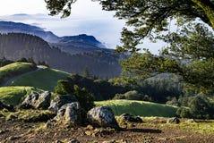Árbol el la primavera del Mt Tamalpais Foto de archivo libre de regalías