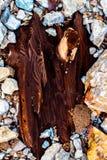 Árbol empedrado Imagen de archivo libre de regalías