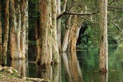 Árbol en agua Imágenes de archivo libres de regalías
