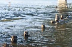 Árbol en agua Imagen de archivo libre de regalías