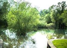 Árbol en agua Foto de archivo