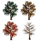 Árbol en aislante de 4 colores en el fondo blanco ilustración del vector