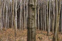 Árbol en bosque Foto de archivo libre de regalías