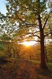 Árbol en bosque del verano Fotos de archivo libres de regalías
