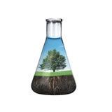 Árbol en botella Imagen de archivo libre de regalías