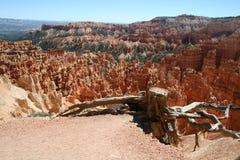 Árbol en Bryce Canyon Fotos de archivo libres de regalías