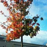 Árbol en caída Imagen de archivo libre de regalías