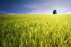 Árbol en campo Imágenes de archivo libres de regalías
