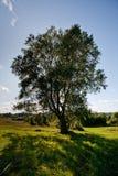 Árbol en campo Fotos de archivo