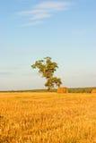 Árbol en campo Fotos de archivo libres de regalías