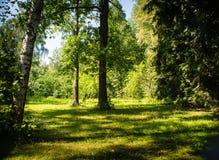 Árbol en campo Fotografía de archivo