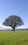 Árbol en campo Foto de archivo libre de regalías