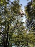 Árbol en campo Foto de archivo