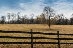 Árbol en campo detrás de la cerca Fotografía de archivo