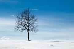 Árbol en campo nevoso Fotografía de archivo