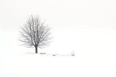 Árbol en campo nevoso Imagen de archivo libre de regalías