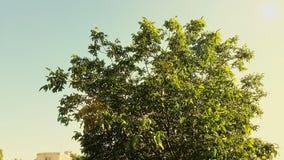 Árbol en cielo Fotos de archivo libres de regalías