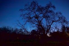 Árbol en cielo Imagenes de archivo