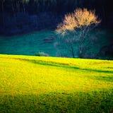 Árbol en clasifiado Fotos de archivo