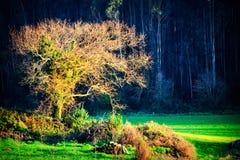 Árbol en clasifiado foto de archivo libre de regalías
