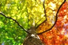 Árbol en colores de la caída Foto de archivo