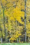 Árbol en colores del otoño fotografía de archivo libre de regalías