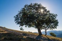 Árbol en contraluz Foto de archivo libre de regalías