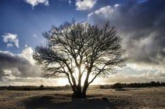 Árbol en contraluz Fotos de archivo libres de regalías